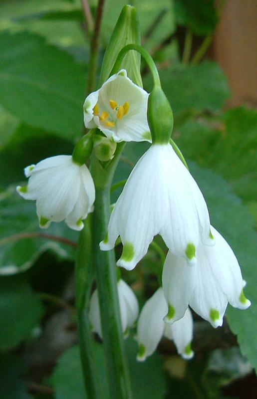 cffc-white-flowers2